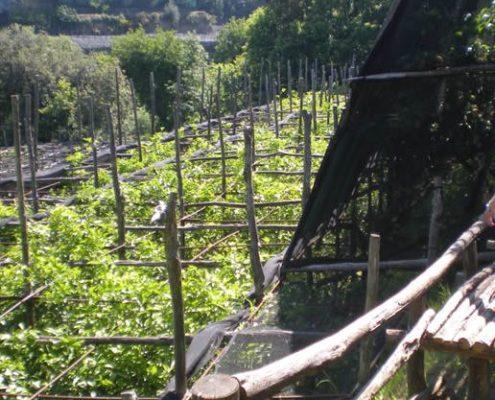 Tuscany's Farm